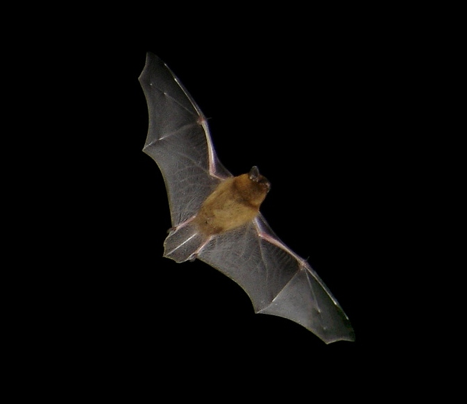 August Bat Night @ Wicklow Mountains National Park