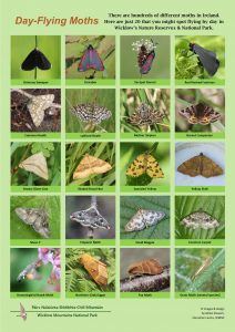 Day Flying Moths Picture Sheet