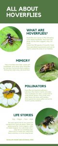 All About Hoverflies Info Sheet